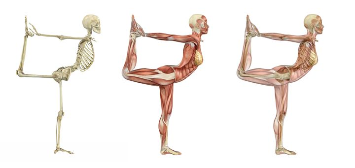 「筋肉」は「骨を動かすため」にある。