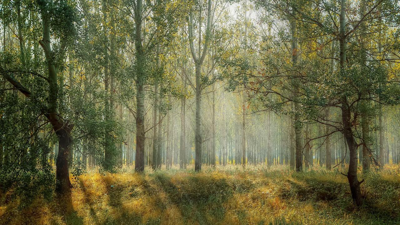 木を見て森を見ず。森を見て木を見ず。そのどちらかだけでは足りない。